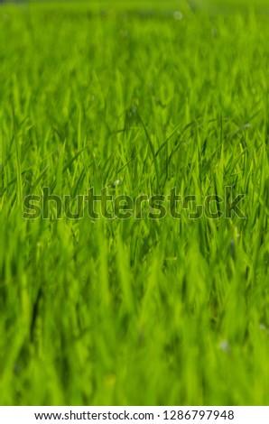 Grass grass grass #1286797948