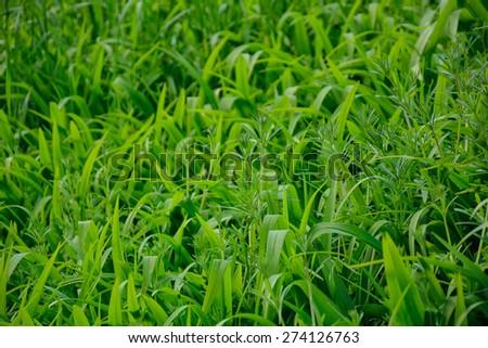 Grass green background Imagine de stoc ©