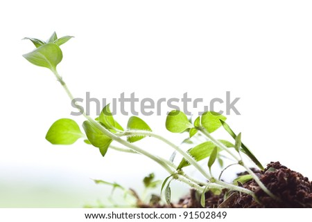 Grass growing from the fertile ground on a white background