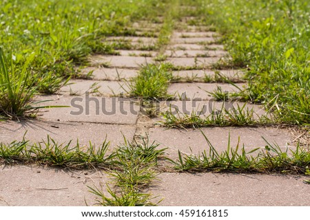 Grass Growing In Road Of Cement Tiles In Garden Close Up. Struggle Weeds.   #459161815