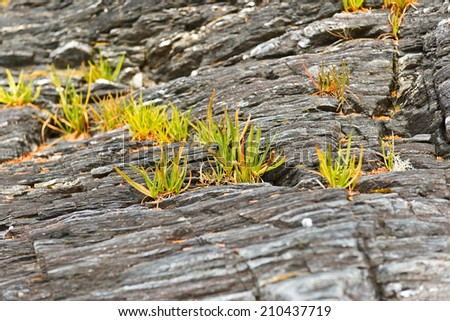 Grass growing on rocks