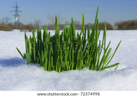 Grass growing through the snow against the background of city