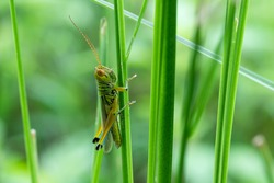 grass hopper in forest