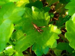 grass hopper on green leaf under gold sunlight