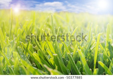 Grass in a meadow with the blue sky in the background