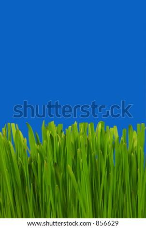Gras im tiefen blauen Himmel