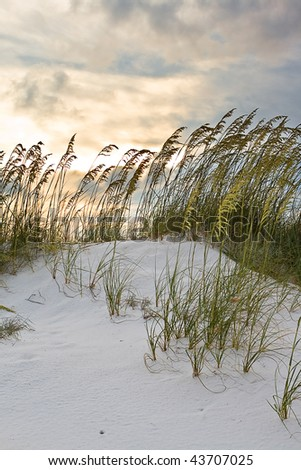 Grass in sand dunes at sunset