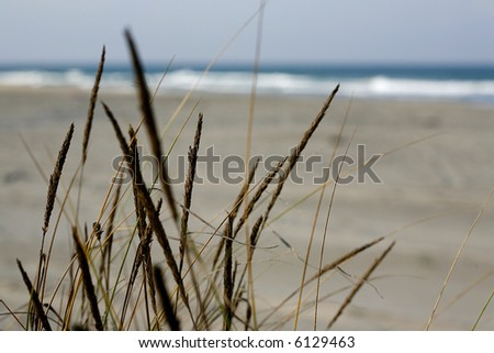 Grass in sand dunes in front of the beach and sea - stock photo