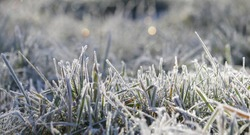 grass in the frost, morning frost