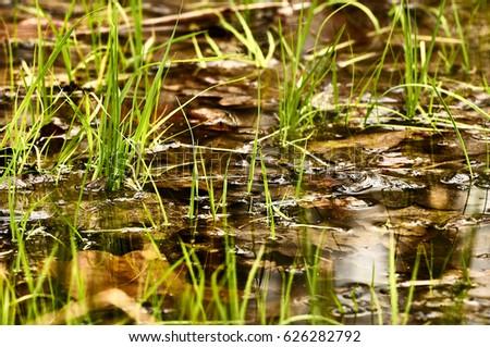 Grass in the water Imagine de stoc ©