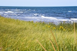 Grass in the wind and ocean in background in Prince Edward Island