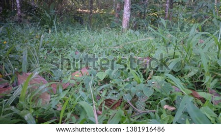 Grass is a monocot plant that has narrow tapered leaves that grow from the base of the stem. Grasses are often planted as ornamental plants, medicinal plants, and animal feed. #1381916486