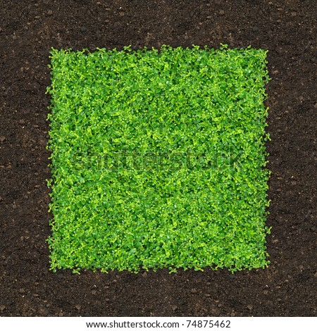 Grass is green rectangle on the ground.