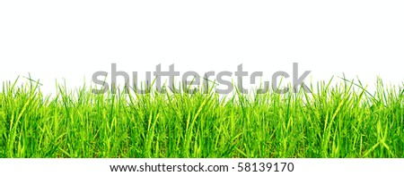 Grass isolated - stock photo