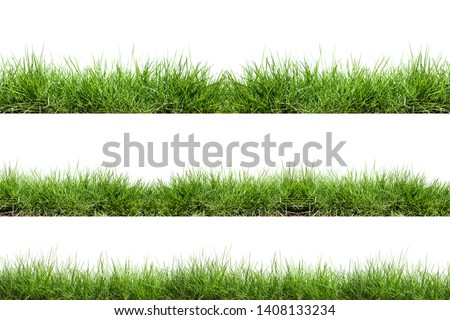 Grass isolated on white background #1408133234