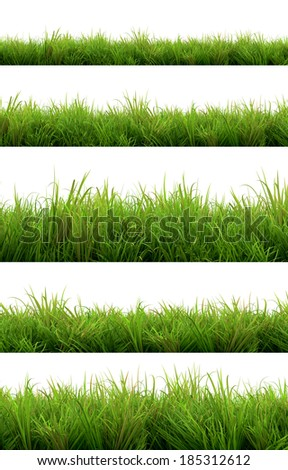 grass isolated on white background - Shutterstock ID 185312612