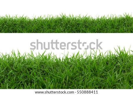 Photo of  Grass isolated on white background.