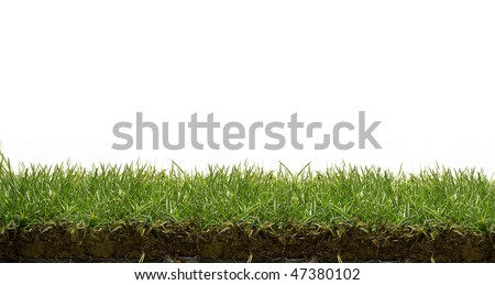 stock photo : grass lawn