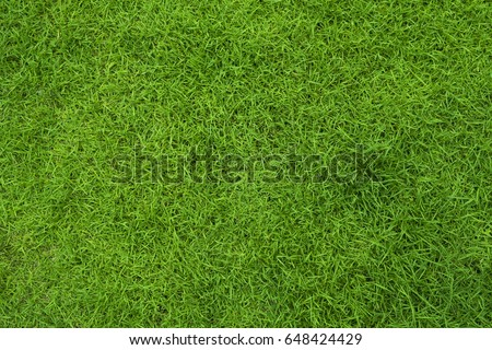 grass lawn green - Shutterstock ID 648424429