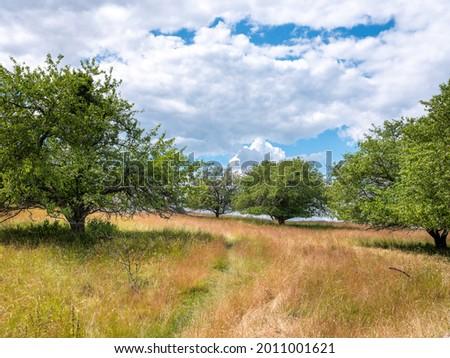 Grass meadow landscape with surrounding lush trees in summer. Shot at Birka, Björkö, Sweden, Scandinavia Stock fotó ©