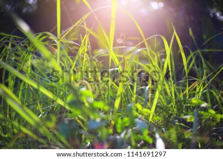 Grass morning sunshine.selective focus.selective focus. #1141691297