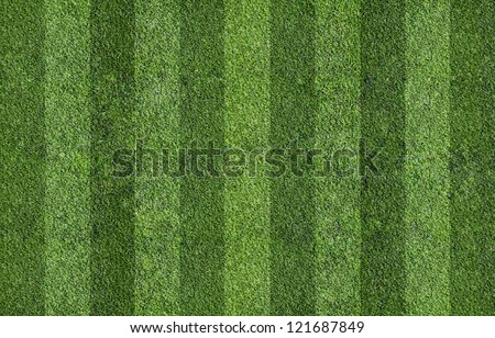 grass of field