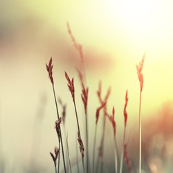 grass of field at sunset. Nature vintage background