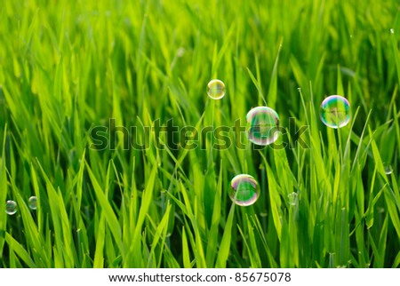 Grass of the meadows and soap bubbles