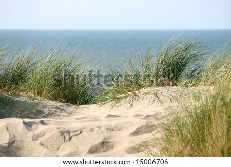 grass on a dune near the sea