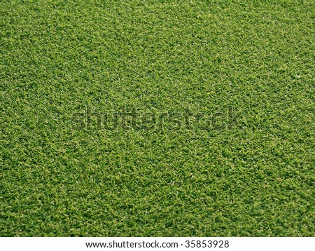 Grass on a golf course