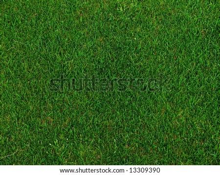 Grass on a golf field