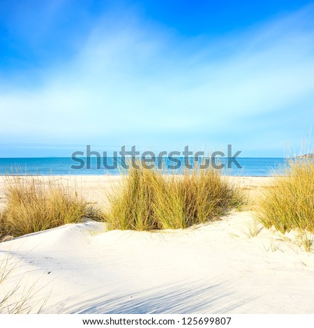 Stock Photo Grass on a white sand dunes beach, blue ocean and sky on background
