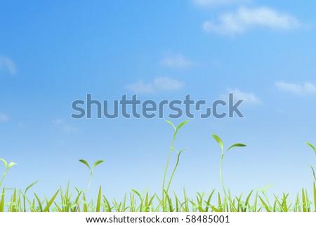 Grass on sky background