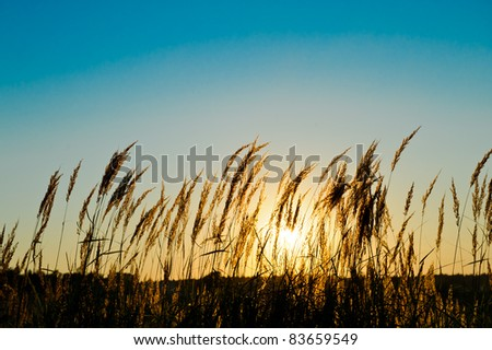 grass on the field at the sunset