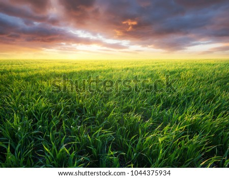 Grass on the field during sunrise. Agricultural landscape in the summer time - Shutterstock ID 1044375934