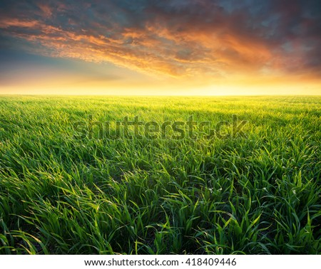Grass on the field during sunrise. Agricultural landscape in the summer time - Shutterstock ID 418409446
