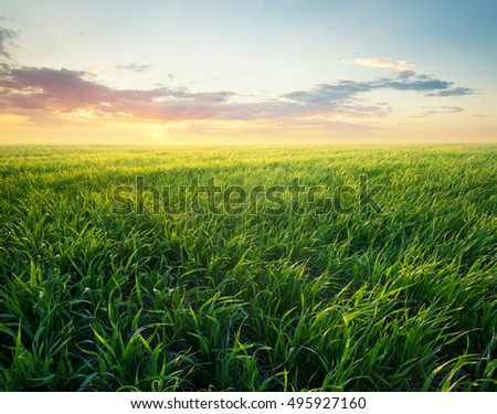 Grass on the field during sunrise. Agricultural landscape in the summer time - Shutterstock ID 495927160