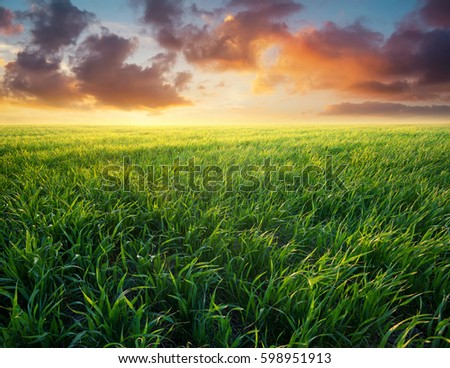 Grass on the field during sunrise. Agricultural landscape in the summer time - Shutterstock ID 598951913
