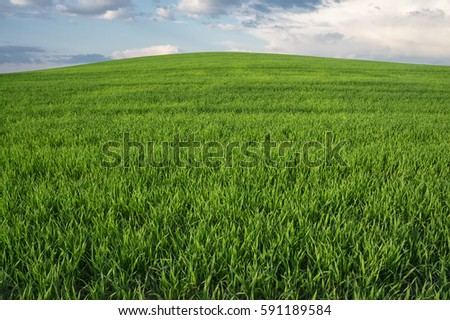 grass on the hill under sky...