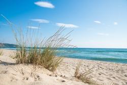 Grass on the sandy beach, the sea and the sunrise