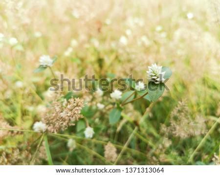 Grass on the way, grass in summer, grass #1371313064