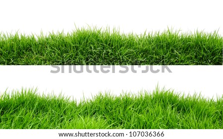 Grass on white background - Shutterstock ID 107036366