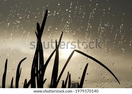 grass (onion) on windowsill, bokeh drops. Beautiful sunset nature background. Grass in the sun and water drops on window. rainy weather Foto stock ©