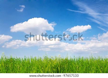 Grass over blue sky