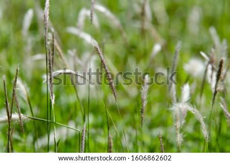 Grass Park Closeup Closeup background