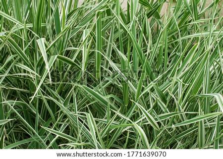 Grass pattern. Green fresh field. Natural concept. Botanical