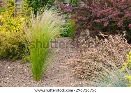 Grass plant set in a an arid garden