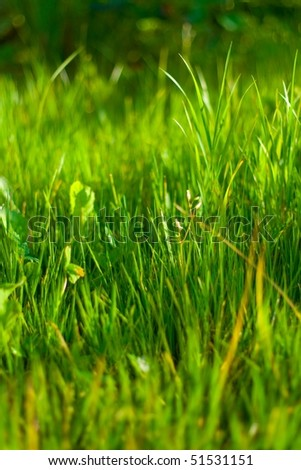 Grass plot #2 - stock photo