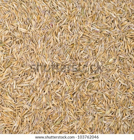 Grass seeds texture for background