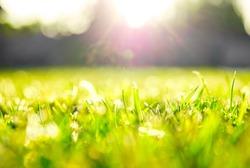 Grass shining in the sun